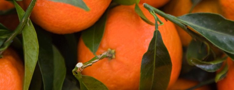 Fragrance Scent - Citrus