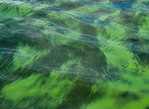 Plankton Extract