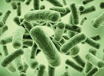 Probiotics Complex