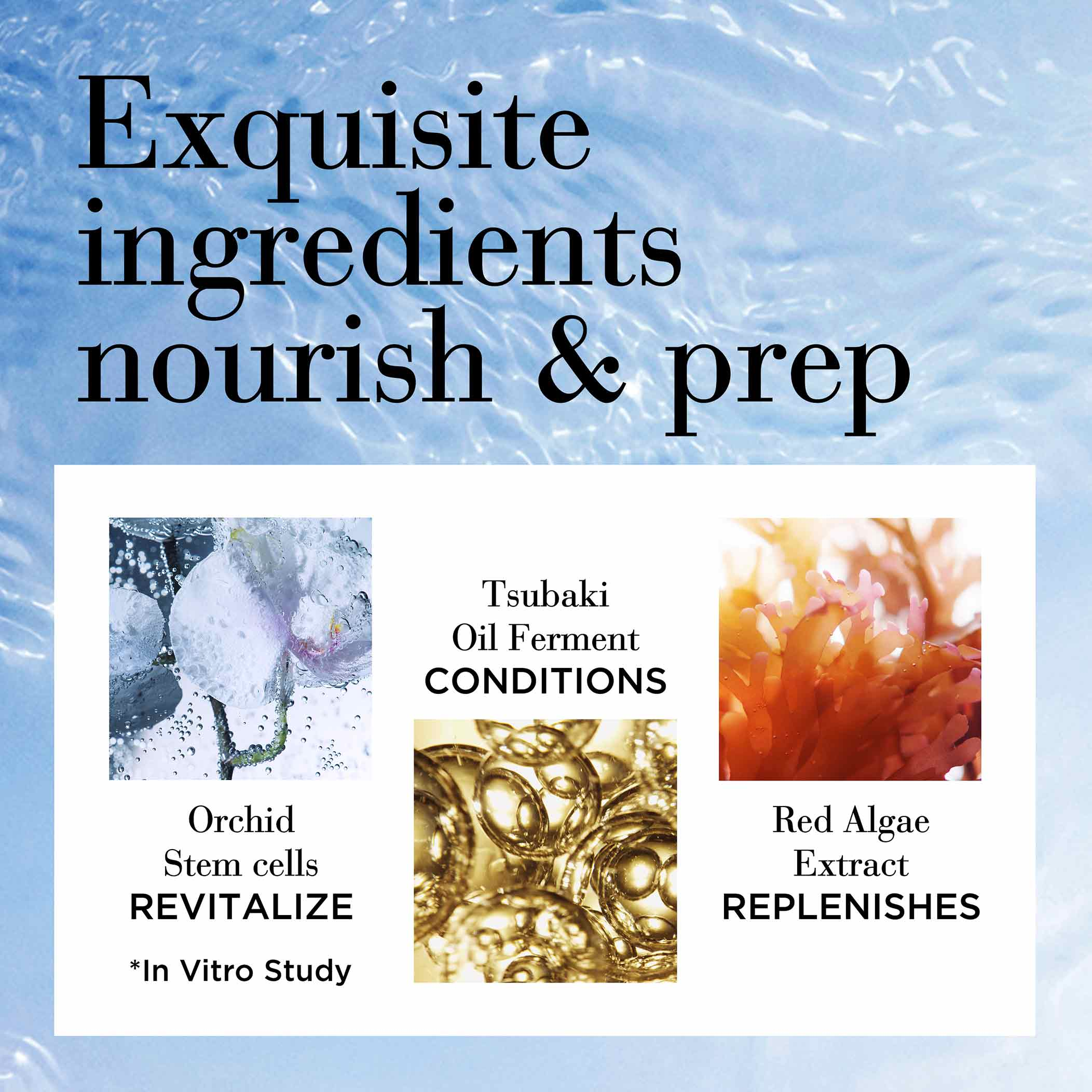 Exquisite ingredients that nourish and prep. Orchid Stem Cells revitalize, Tsubaki oil ferment conditions and red algae extract replenishes based in vitro study
