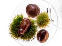 Chestnut Extract