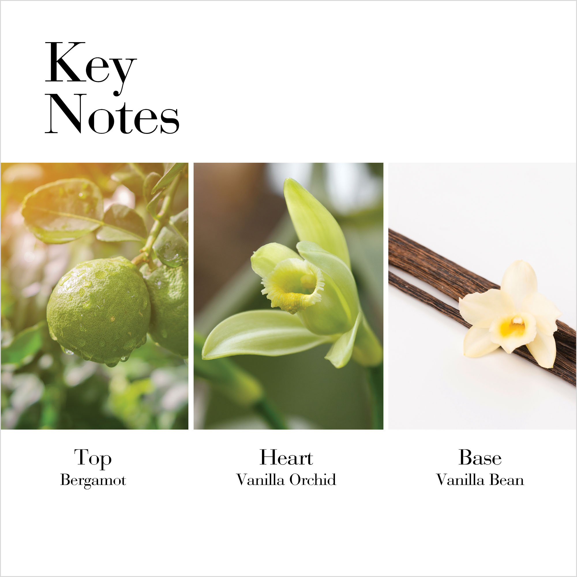 Key Notes: Top Bergamot, Heart Vanilla Orchid, Base Vanilla Bean