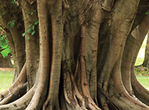 Madras Wood
