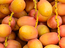 Paracress and Date Palm Kernel Extracts
